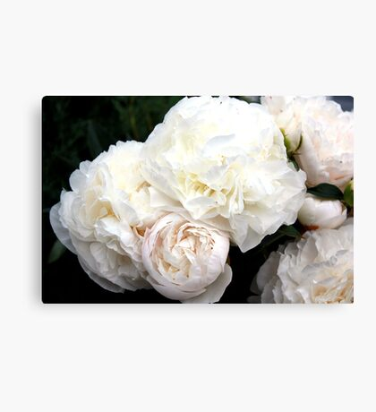 Touch of Blush Canvas Print