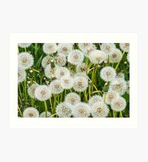 Taraxacum, Dandelion Art Print