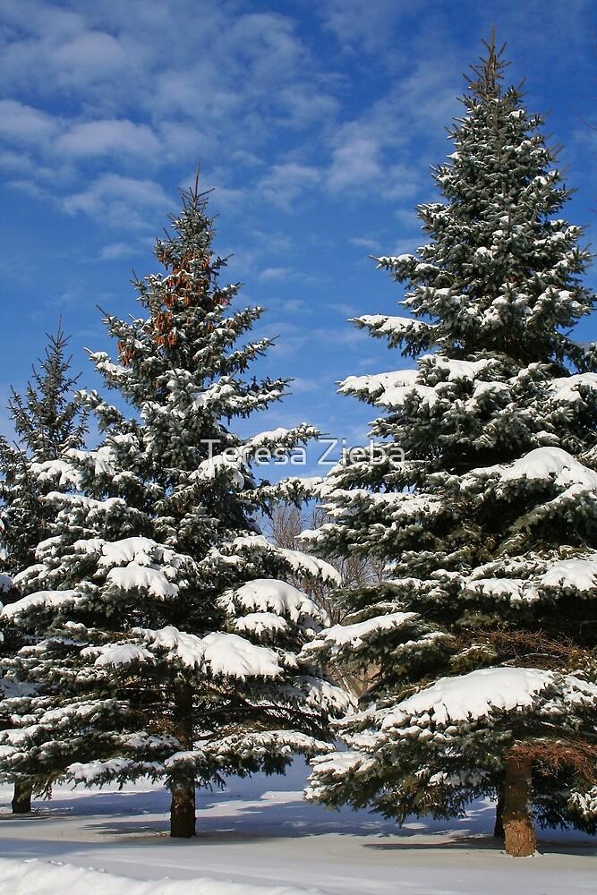 The Beauty of Winter by Teresa Zieba