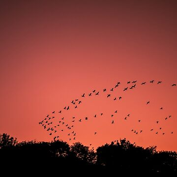 Birds in the red sky by ARGO