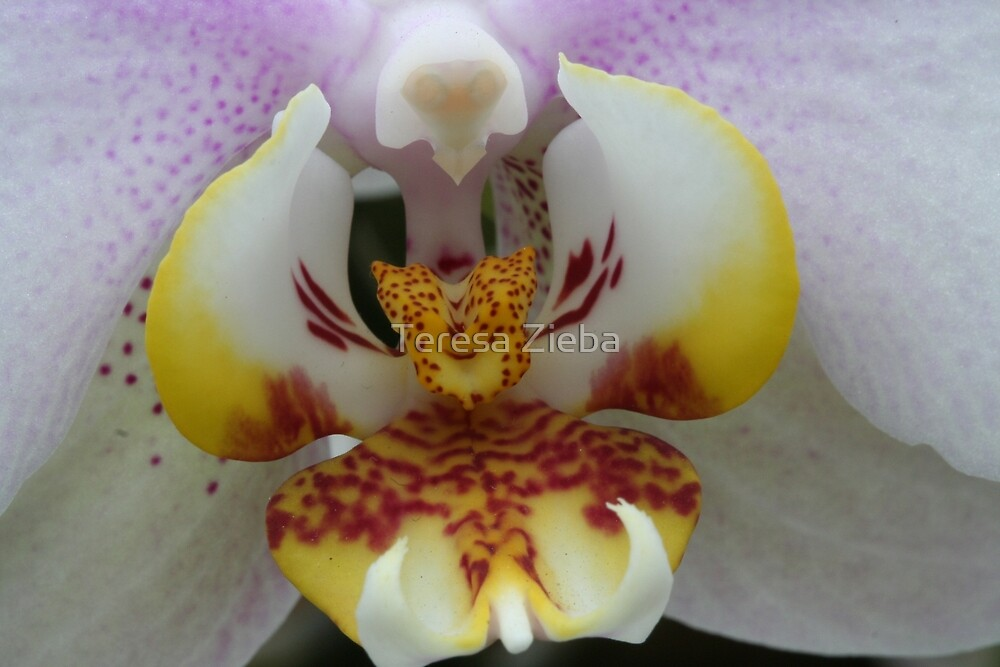 The Heart of The Orchid by Teresa Zieba