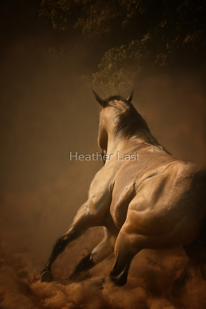 Dancing in the Dust by Heather Last