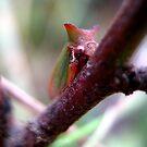 Horned Green Treehopper 2 by Vanessa Barklay