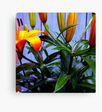 The First To Open Canvas Print