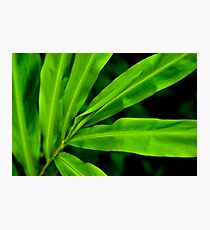Green Scale Photographic Print