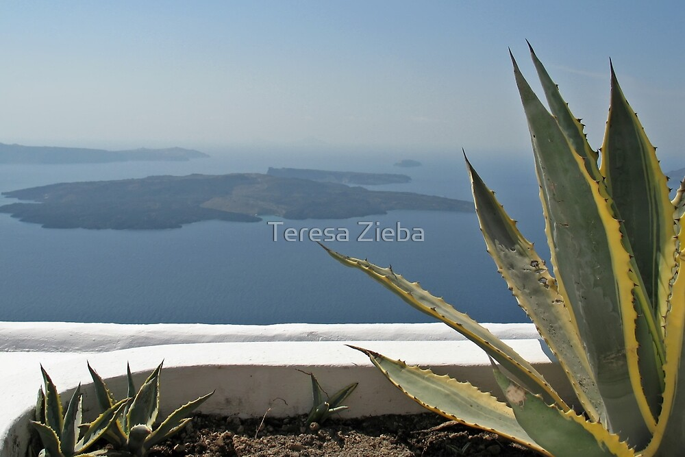 This One Great View by Teresa Zieba