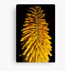 Yellow Brush Canvas Print