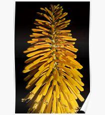 Yellow Brush Poster