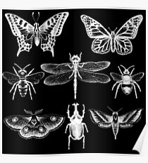 White Insect Series Poster