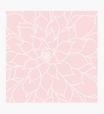Rose Quartz Succulent Photographic Print