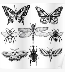 Insect Series in pointillism Poster