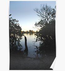 Manning Mangrove Poster