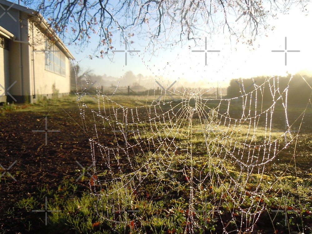 Dew on Spiders Web by Barbara Caffell