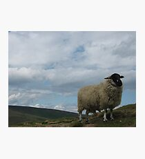 Peak Sheep Photographic Print