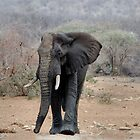 THE LONELY BUL -  THE AFRICAN ELEPHANT – Loxodonta africana by Magriet Meintjes