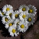Simply...Heart by Kasia Fiszer