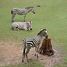 zebras by rue2