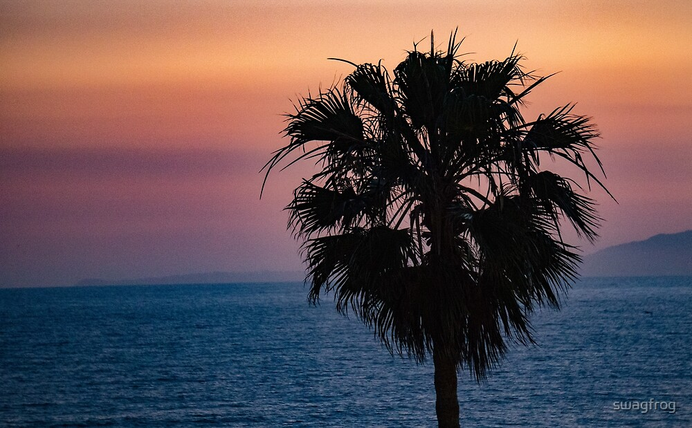 Venice Beach - Palm Tree by swagfrog
