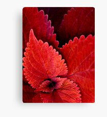 Serration in Red Canvas Print