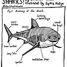 Sharks! - Anatomy of a Shark by lifeofsharks