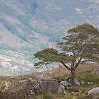 Lonesome Pine by Jennifer J Watson