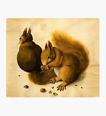 ANTIQUE ANIMAL DRAWINGS ,THE SQUIRRELS WITH NUTS Photographic Print