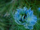 Spiky Blue at Kew Gardens by Themis
