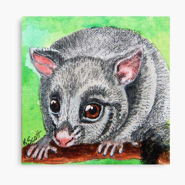 Brush-Tailed Possum Canvas Print