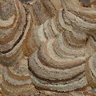 Wasps Nest by SAngell