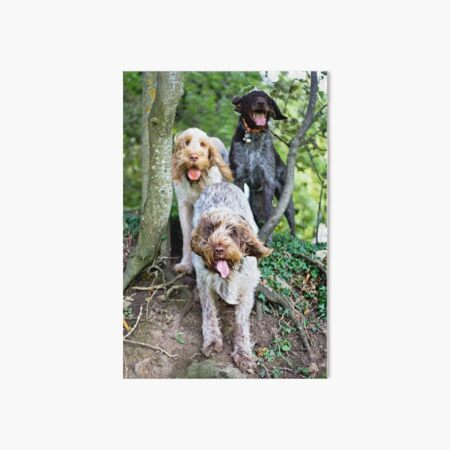Spinoni And German Wirehaired Pointer Woodland Adventure Art Board Print