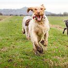 Galloping Away From Glastonbury Tor by heidiannemorris