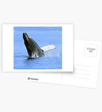 Baby Humpback Whale Breaching Postcards