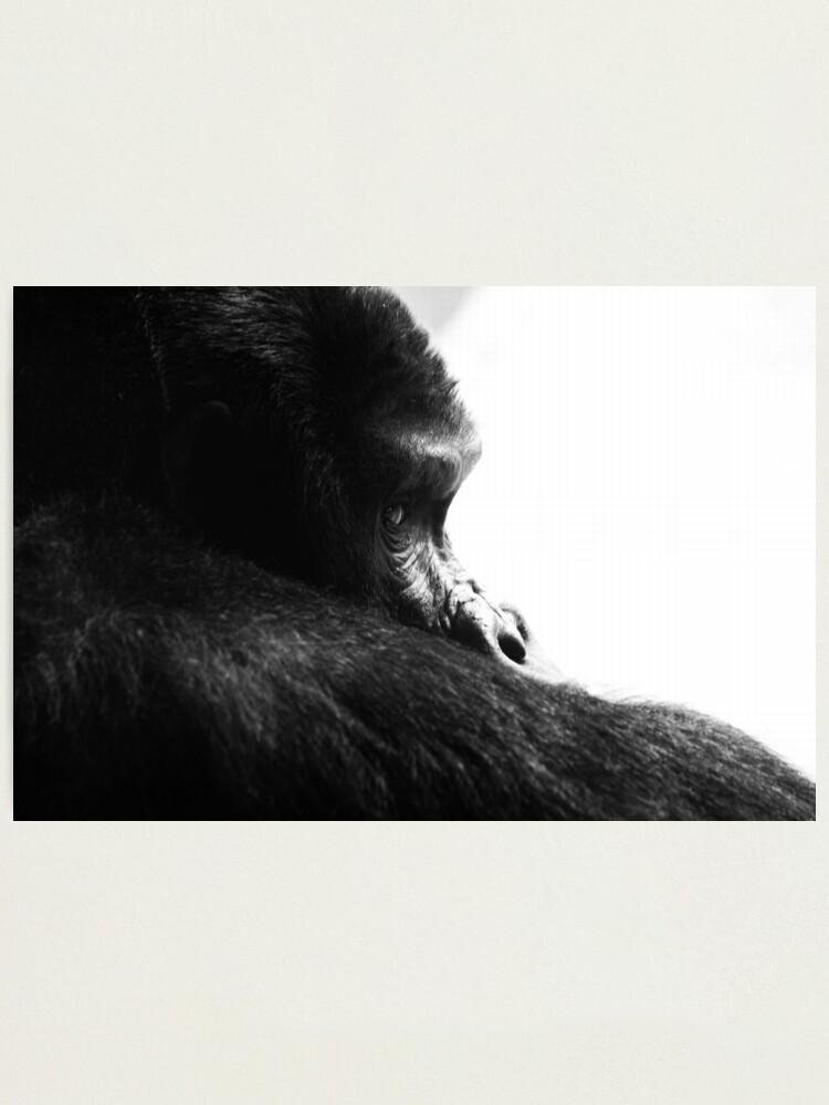 Alternate view of Gorilla! Photographic Print