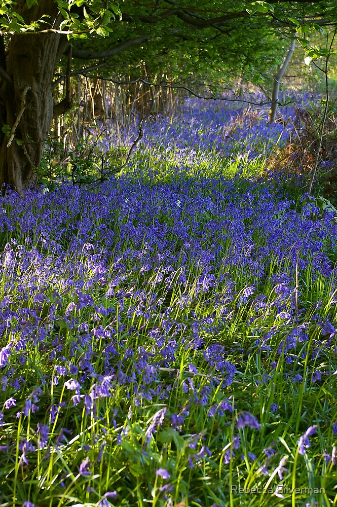 Bluebell Woods III by Rebecca Silverman