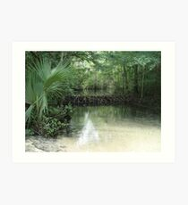Beaver Dam and Pond on Econfina Creek Art Print