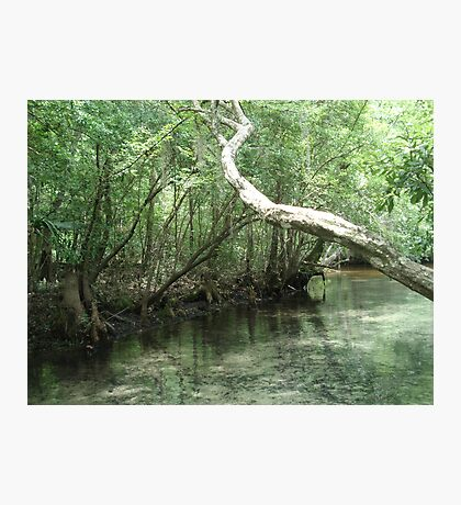 The Overhanging Branch Photographic Print