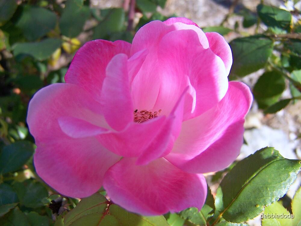 Pretty in Pink by debbiedoda
