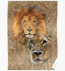Lion King and Queen Poster
