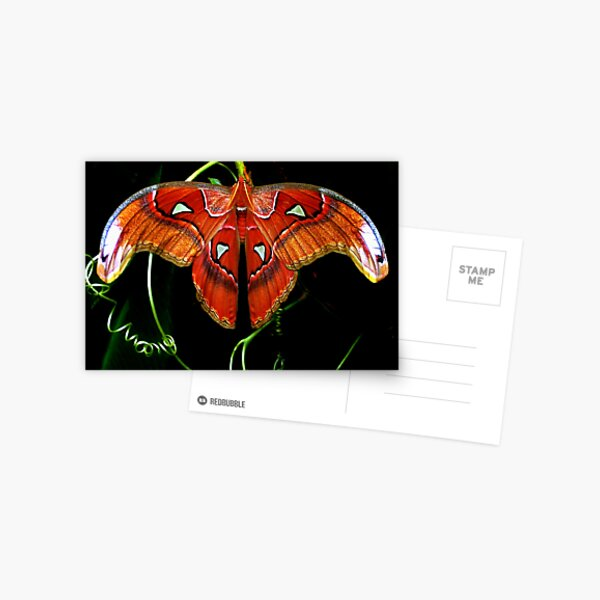 Moth! Postcard
