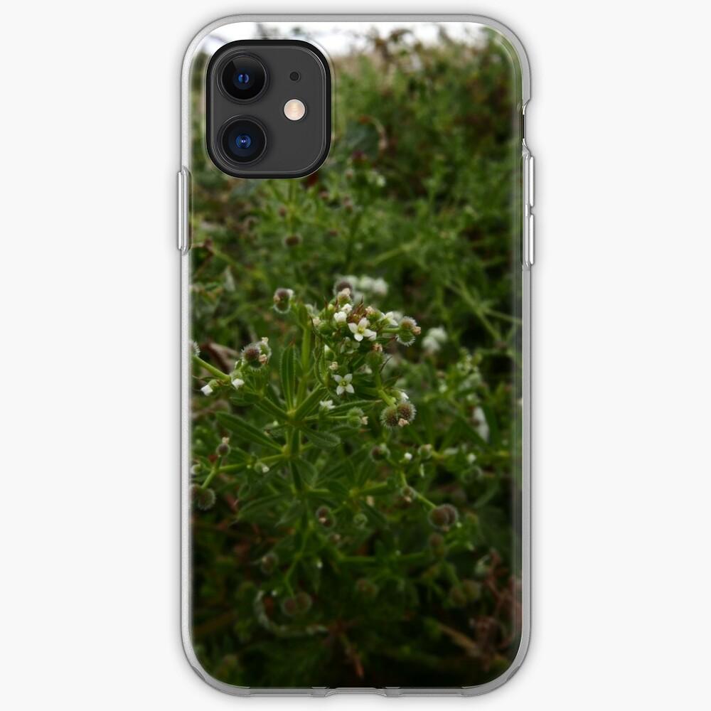 Cleavers (Galium aparine) iPhone Case & Cover