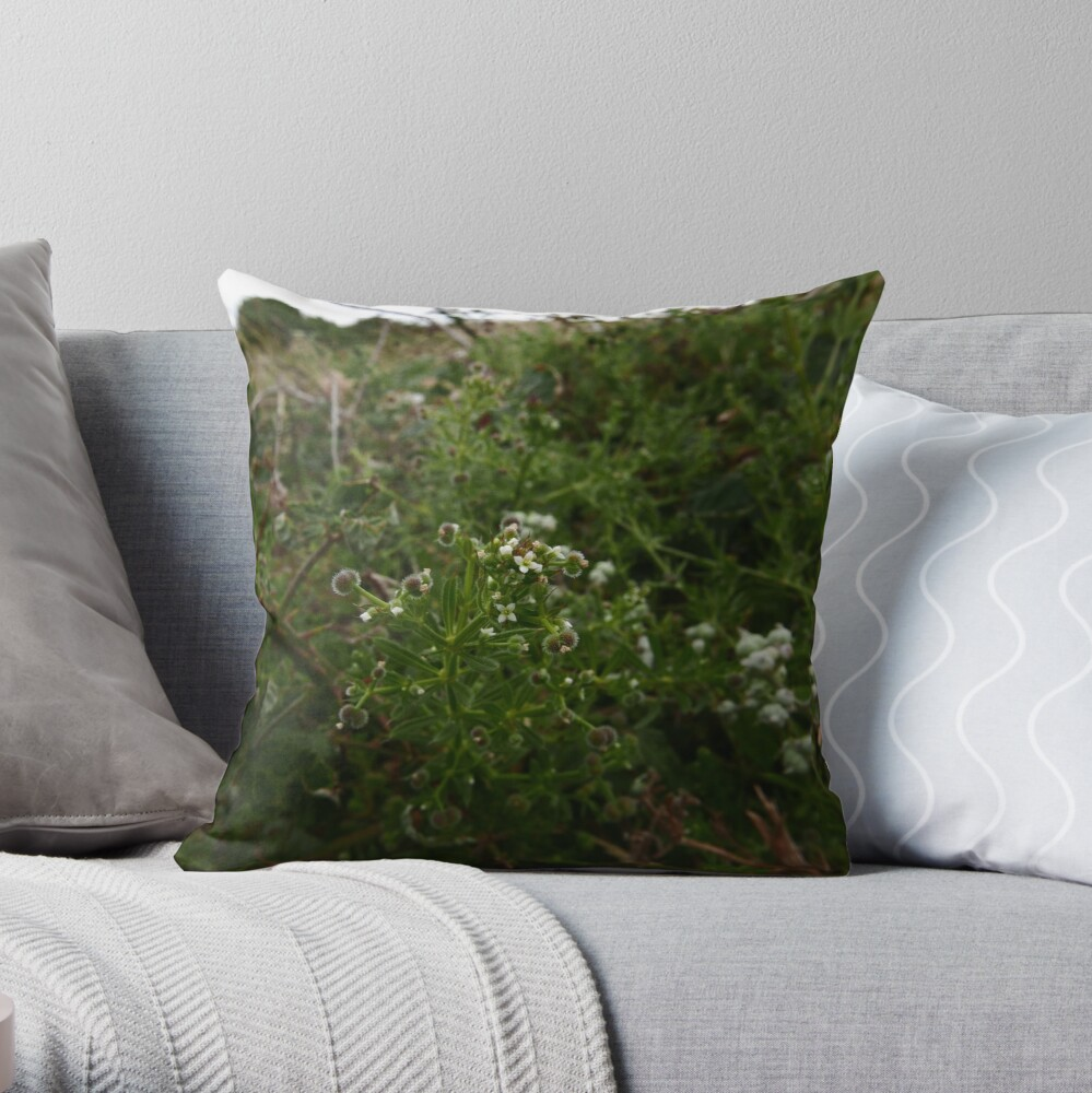 Cleavers (Galium aparine) Throw Pillow