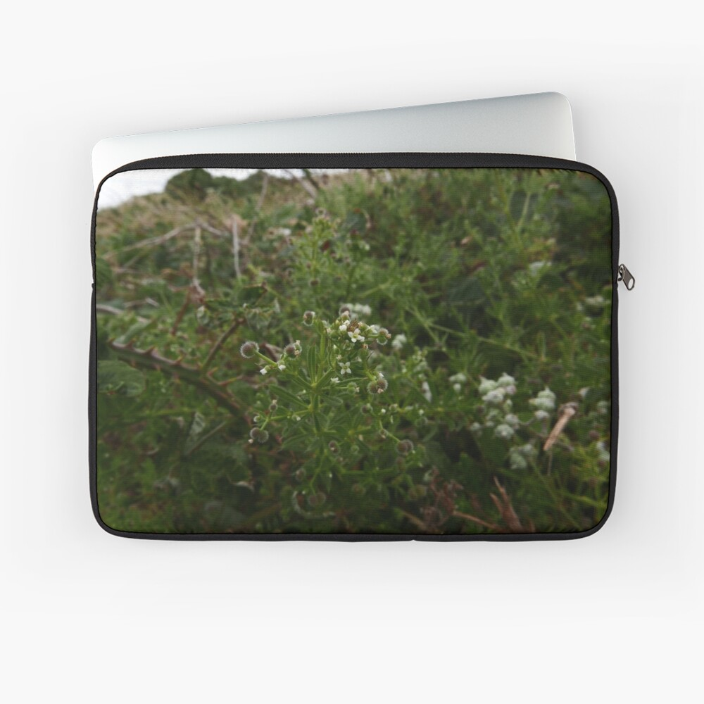 Cleavers (Galium aparine) Laptop Sleeve