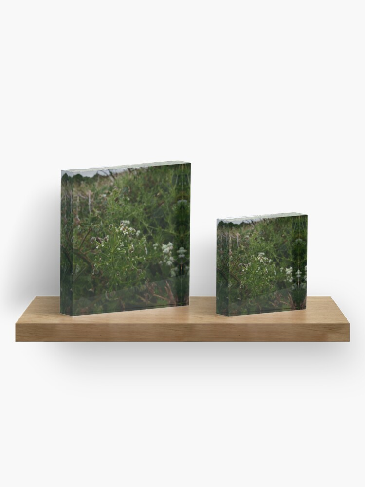 Alternate view of Cleavers (Galium aparine) Acrylic Block