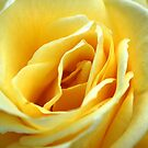 Yellow Ruffles! by Tina Longwell