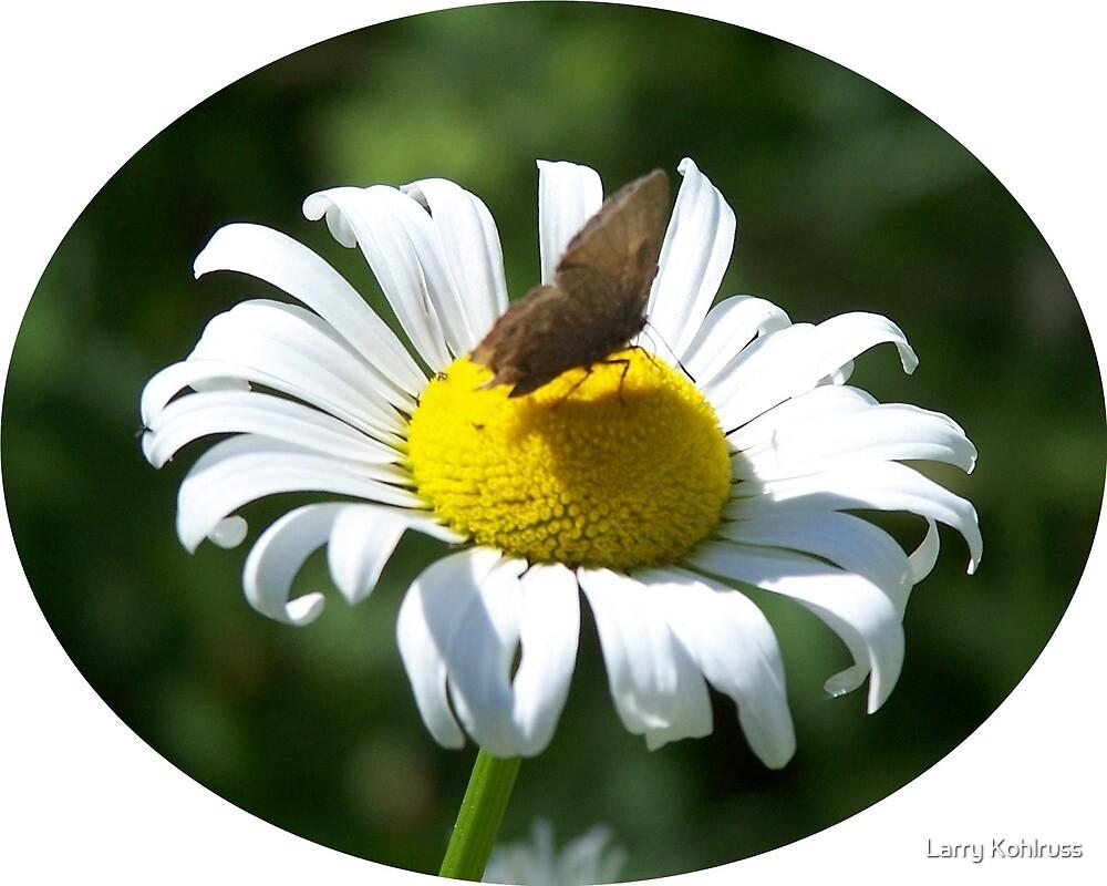 Butterfly. 3 by Larry Kohlruss
