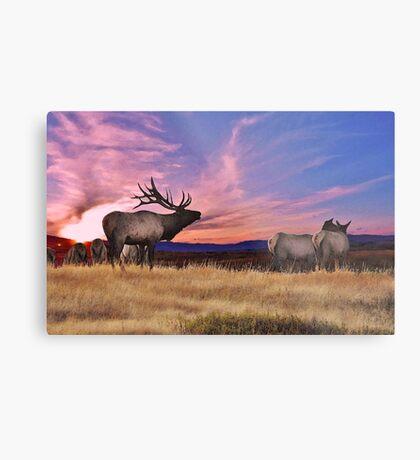 Elk Sunset Metal Print