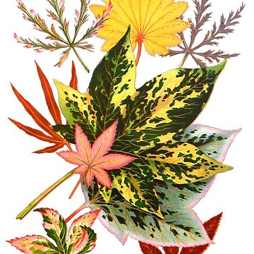 Victorian Vintage Scrapbook Maple Leaves in Fall Colors by vinpauld