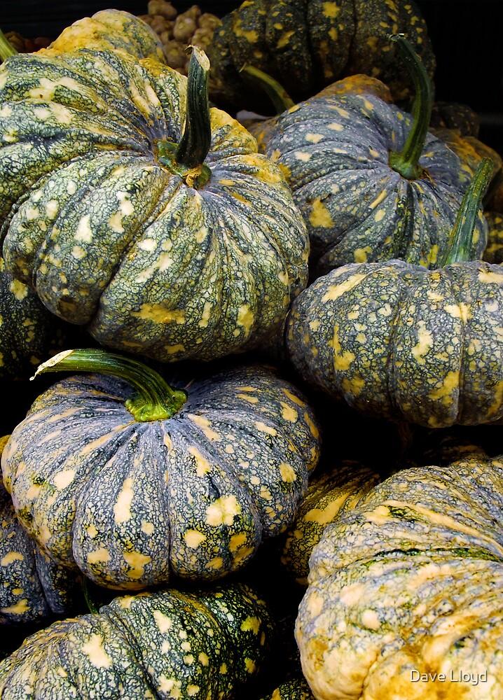 Pumpkin by Dave Lloyd