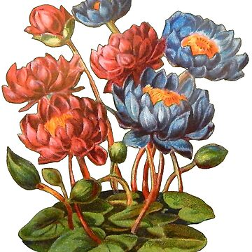 Victorian Red and Blue Waterlilies Vintage Scrapbook Flowers by vinpauld