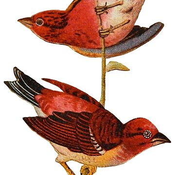 Victorian Red Sparrows Vintage Scrapbook Birds by vinpauld
